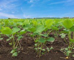 農業生産法人設立